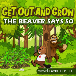 beaver seeds 10% off coupon code